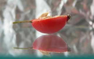 Чай из шиповника — природный иммуномодулятор для всей семьи