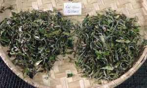 Элитный индийский чай «Дарджилинг» или «Чайное Шампанское»