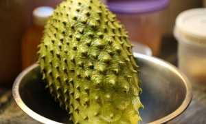 Экзотический зеленый чай с саусепом