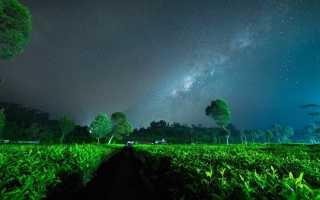 Что необходимо знать о зеленом чае на ночь