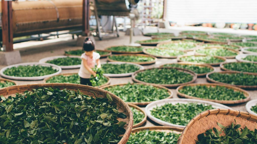 сушка зеленого чая