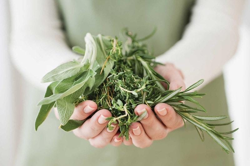 Травы для почечного чая