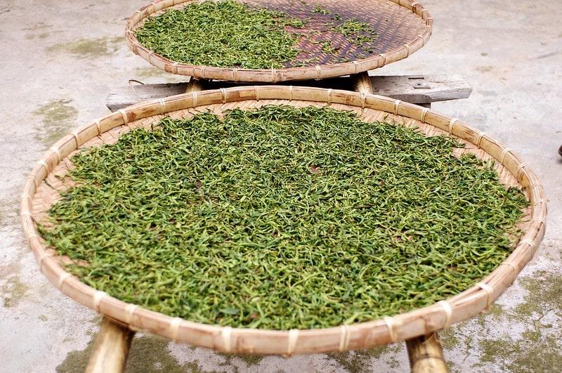 Технология сушки чайных листьев