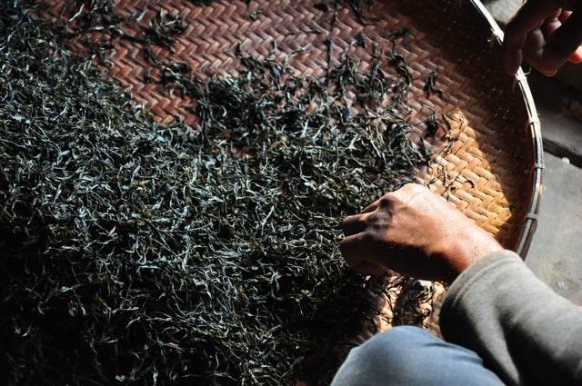 Сушка чая перед ферментацией
