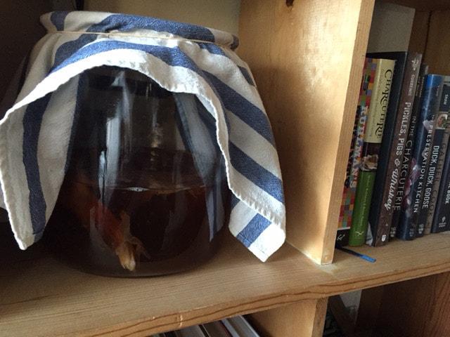 Выращивание чайного гриба дома