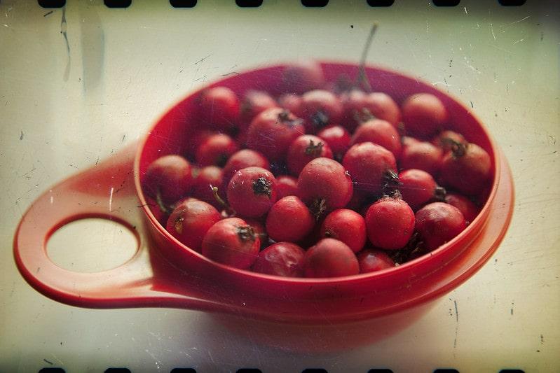 свежие плоды боярышника