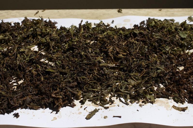 Ферментация чайного сырья