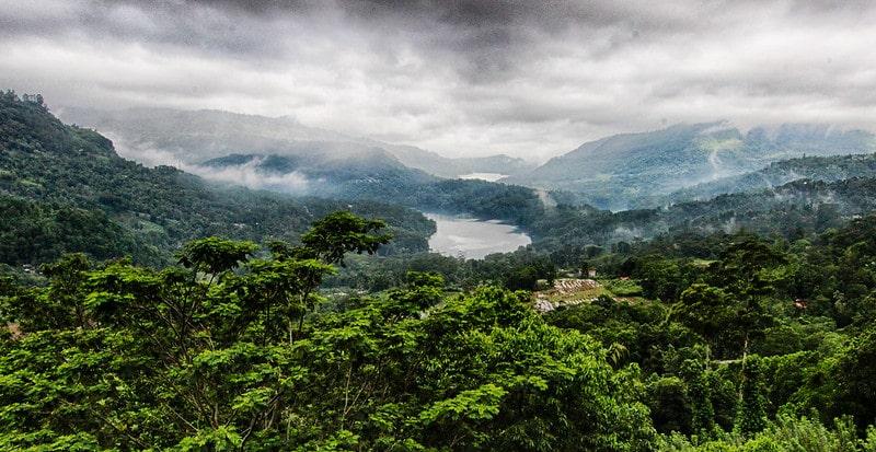 Экологически чистые чайные плантации
