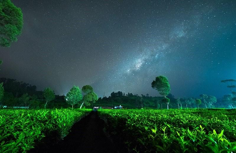 Зеленый чай ночь